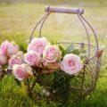 Votre jardin