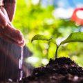 plante-compost